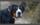 relation chien, Comportementaliste chiens, éducatrice chiens