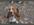 comportementaliste chiens, éducatrice chiens, Passionnée animaux