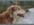 Comportementaliste chiens, éducatrice chiens, relation chien